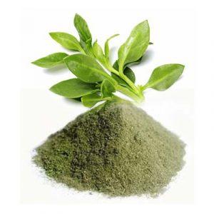 kalmegh-powder